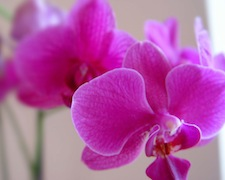 pink orchid for content block 3